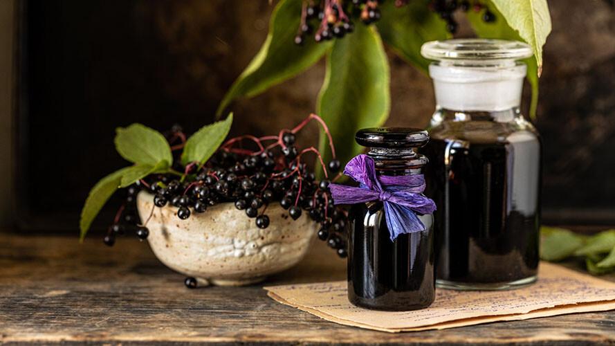 接骨木莓 是免疫保健領域的潛力素材