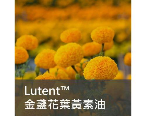 保健食品原料 - Lutent 游離型金盞花葉黃素油